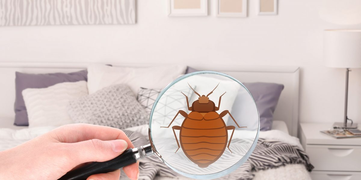 Create Your Own DIY Bed Bug Extermination Kit