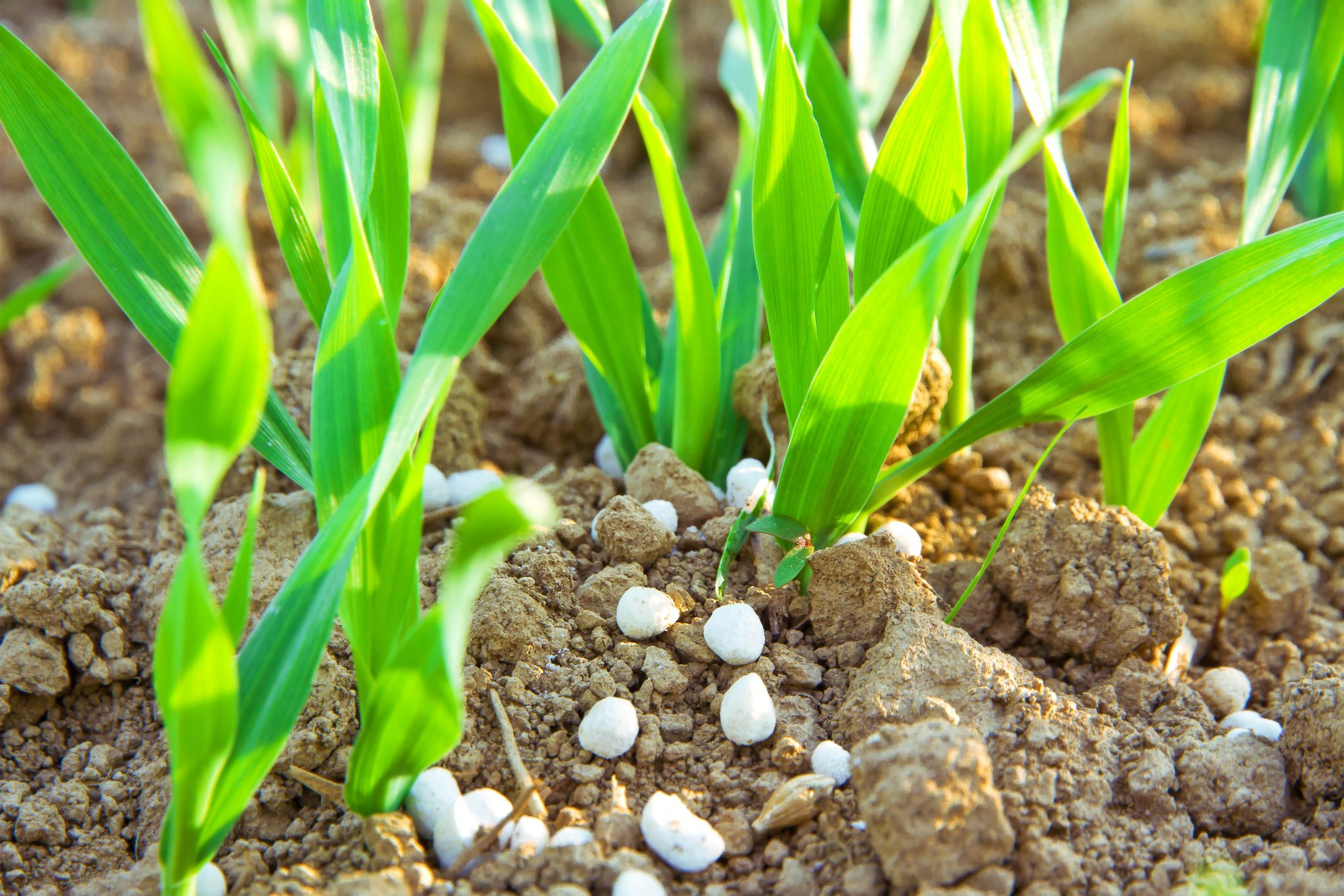 The Role of Silicon in Plant Nutrition
